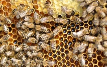Мёд из колоды
