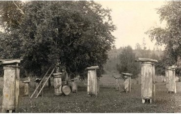 История пчеловодства в Иркутской области