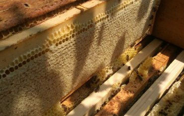 Урожай мёда 2018 года