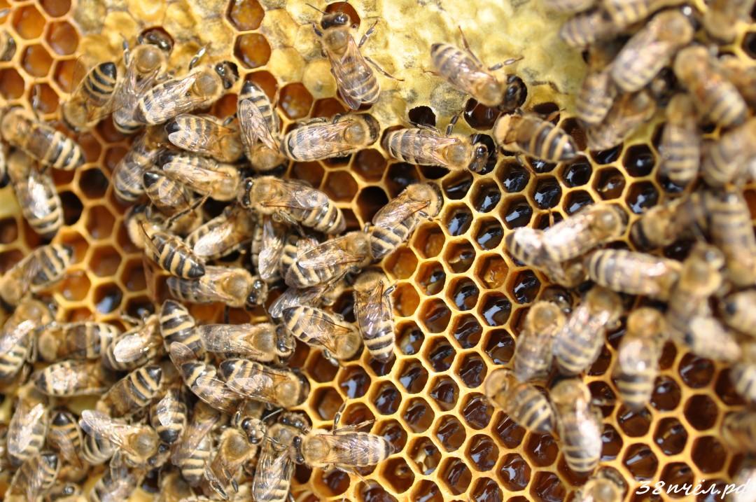 Пчёлы купить иркутская обл